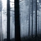 cdp forests